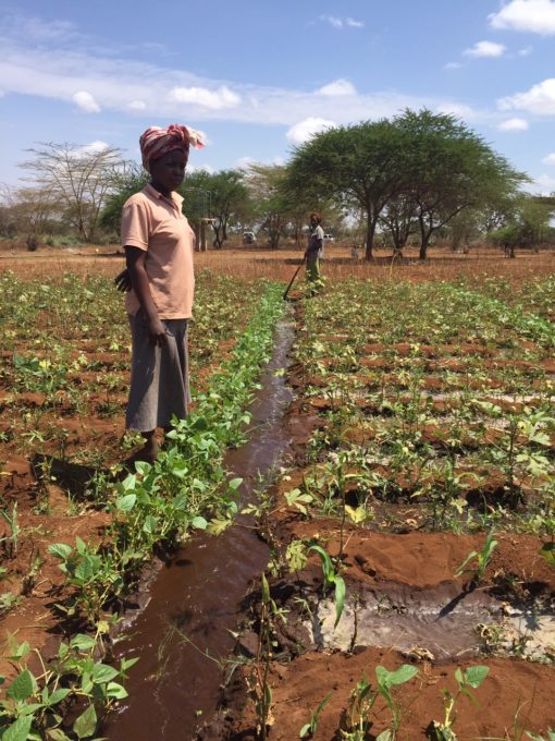 Mary Kilonzo can now grow crops even during the dry season.