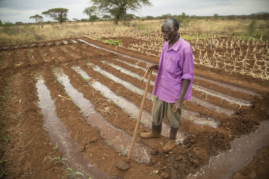 Mr. Peter Manyambu irrigates his field with water drawn from a solar-powered well